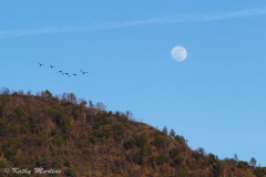 Lucky-Moon