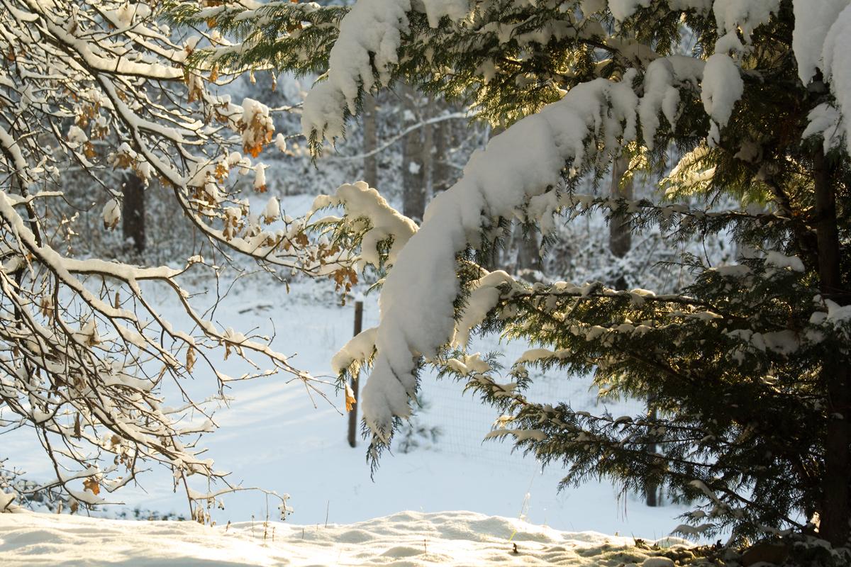 WinterBows