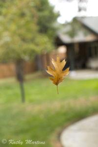 A Leafy Friend